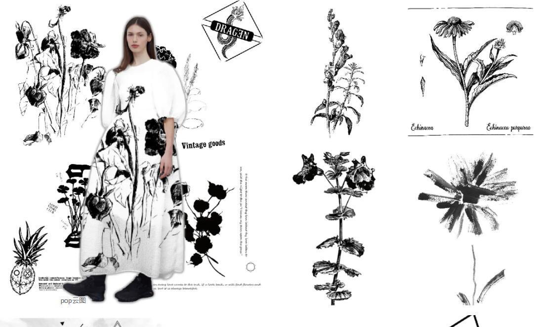 Black & White Specimen flower